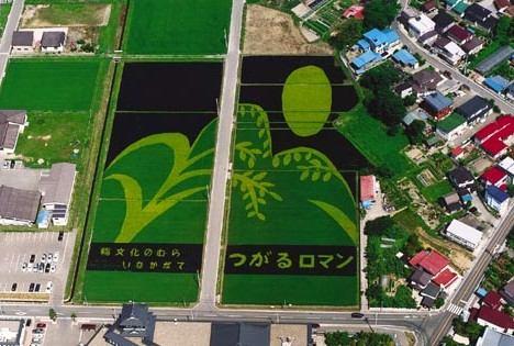 Фотография рисового поля